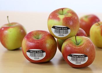 Lebensmittel kennzeichnen mit PE-Etiketten